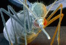 En 1892: cómo fue identificado el primer virus de la historia y qué pasó después