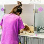 Alertan sobre la importancia de cuidar la sanidad animal para controlar futuras epidemias